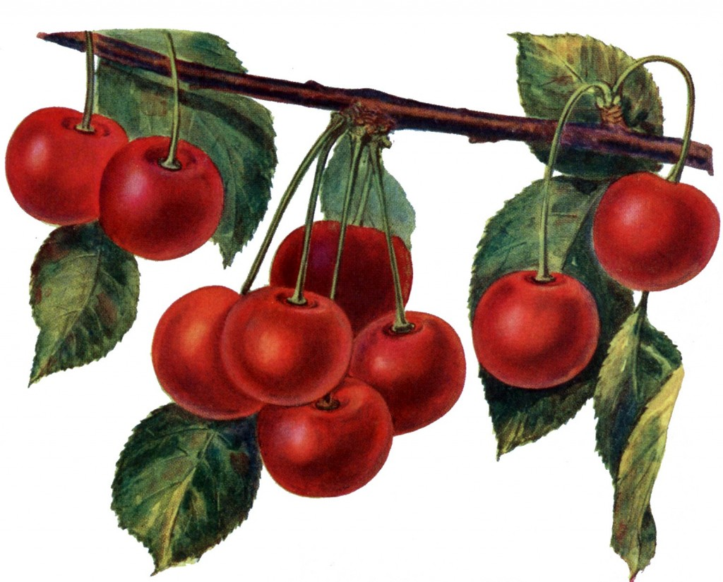 Vintage cherries from TheGraphicsFairy.blogspot.com